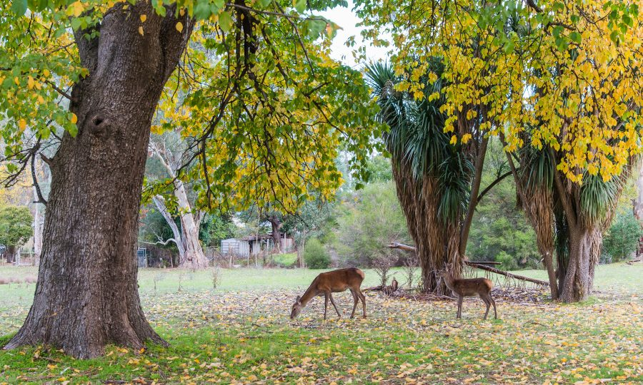 Things to do in Halls Gap, Grampians National Park